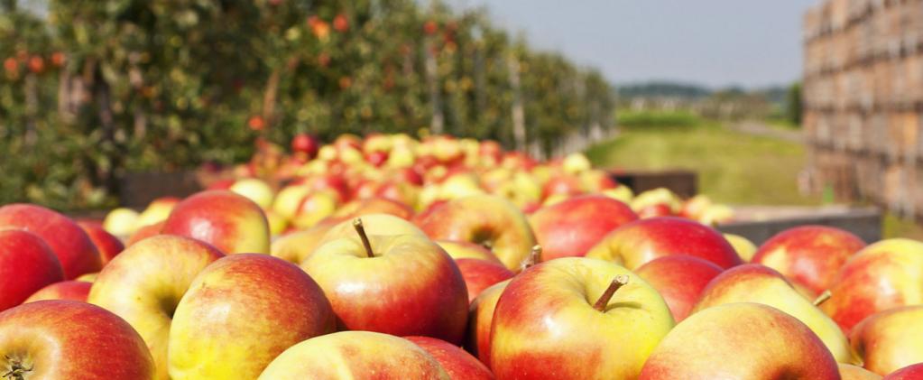 Robots planning to raid orchards: Abundant Robotics to automate apple harvests