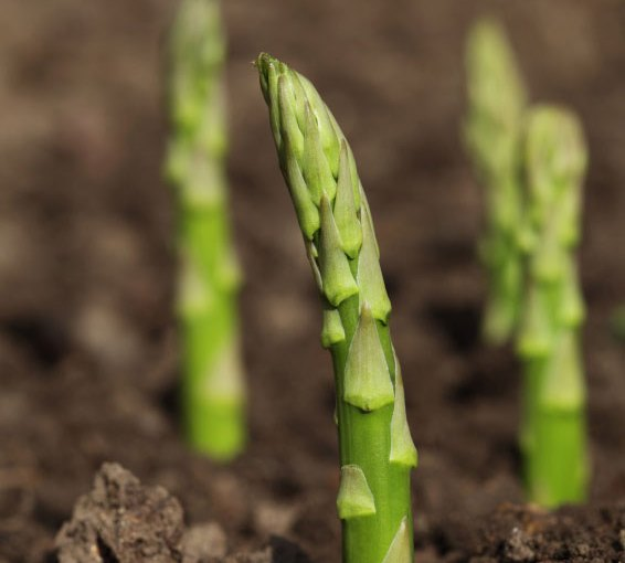 Connected asparagus: Bosch outlines vision of a future with connected factories and robotic farmers