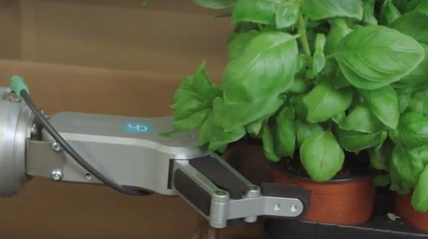 Flexible 'robot hands' pack delicate herbs
