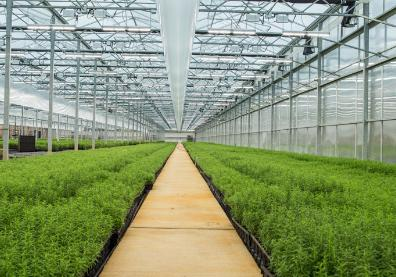 Osram acquires US 'smart grow' lighting firm