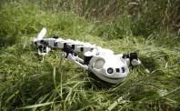 Robotsalamander förflyttar sig som en verklig salamander