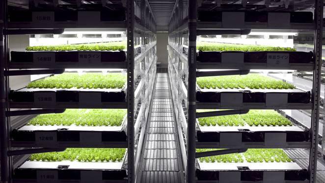 Spread-vertical-farm-trays.jpg.662x0_q70_crop-scale.jpg