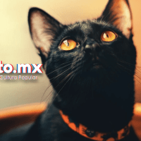Campaña de protección a los Gatitos Negros.
