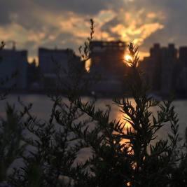 Nature Meets City