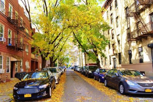 Autumn In Queens