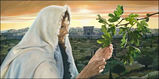 Image result for Jesus curses the fig tree pictures