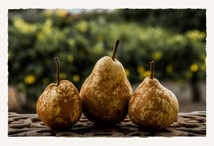 Three_Pears_DSC7198___