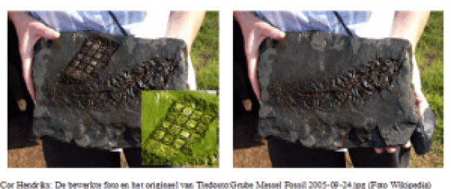 Collage met fossiele vis (Cor Hendriks)