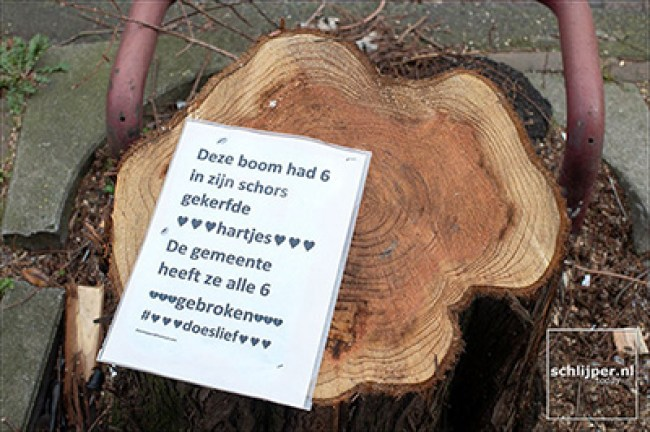 Deze boom had zes in zijn schors gekerfde hartjes, de gemeente heeft ze alle zes gebroken (foto Thomas Schlijper, schlijper.nl)
