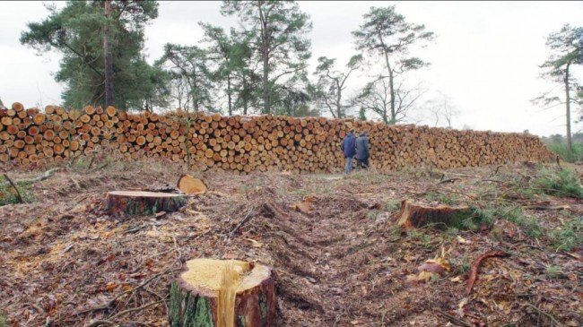 Kaalslag in Nederlandse bossen (foto Thomas Schlijper schlijper.nl)