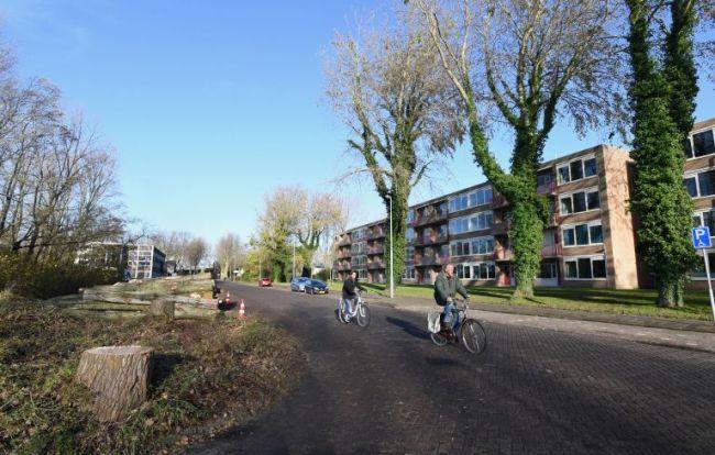 De Drs. F. Bijlweg zonder bomen (foto George Stoekenbroek)