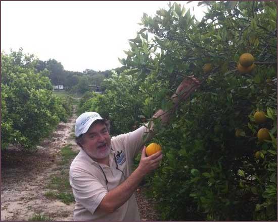 2013-0426-Tangerine-ORanges
