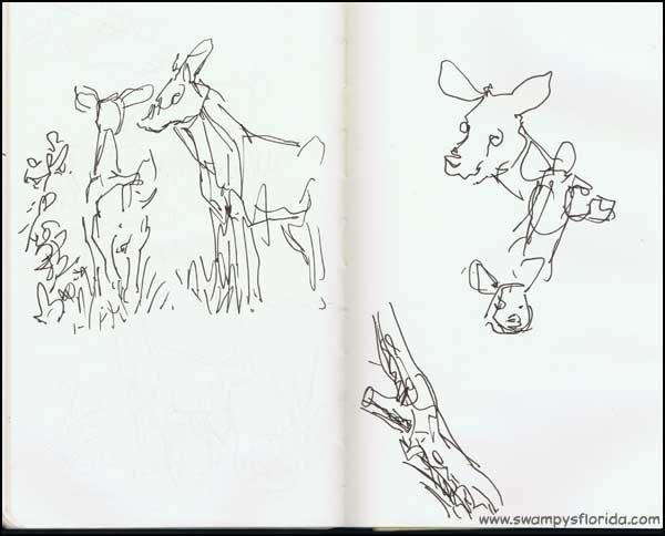 2013-1107-SilverSpringsStPk-Deer-1