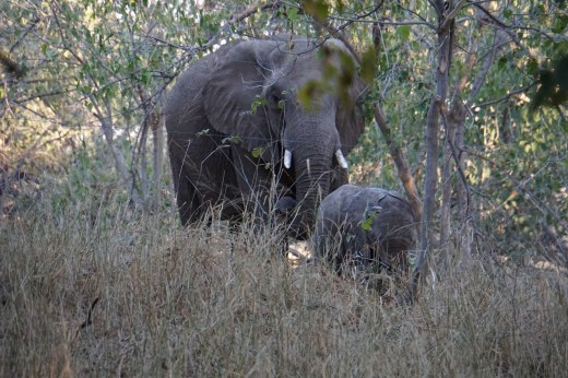 A visit just beyond the elephant wire