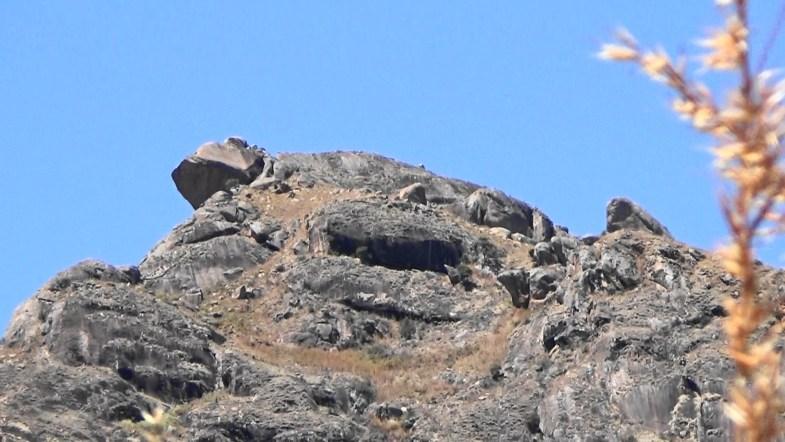 Chameleon mountain