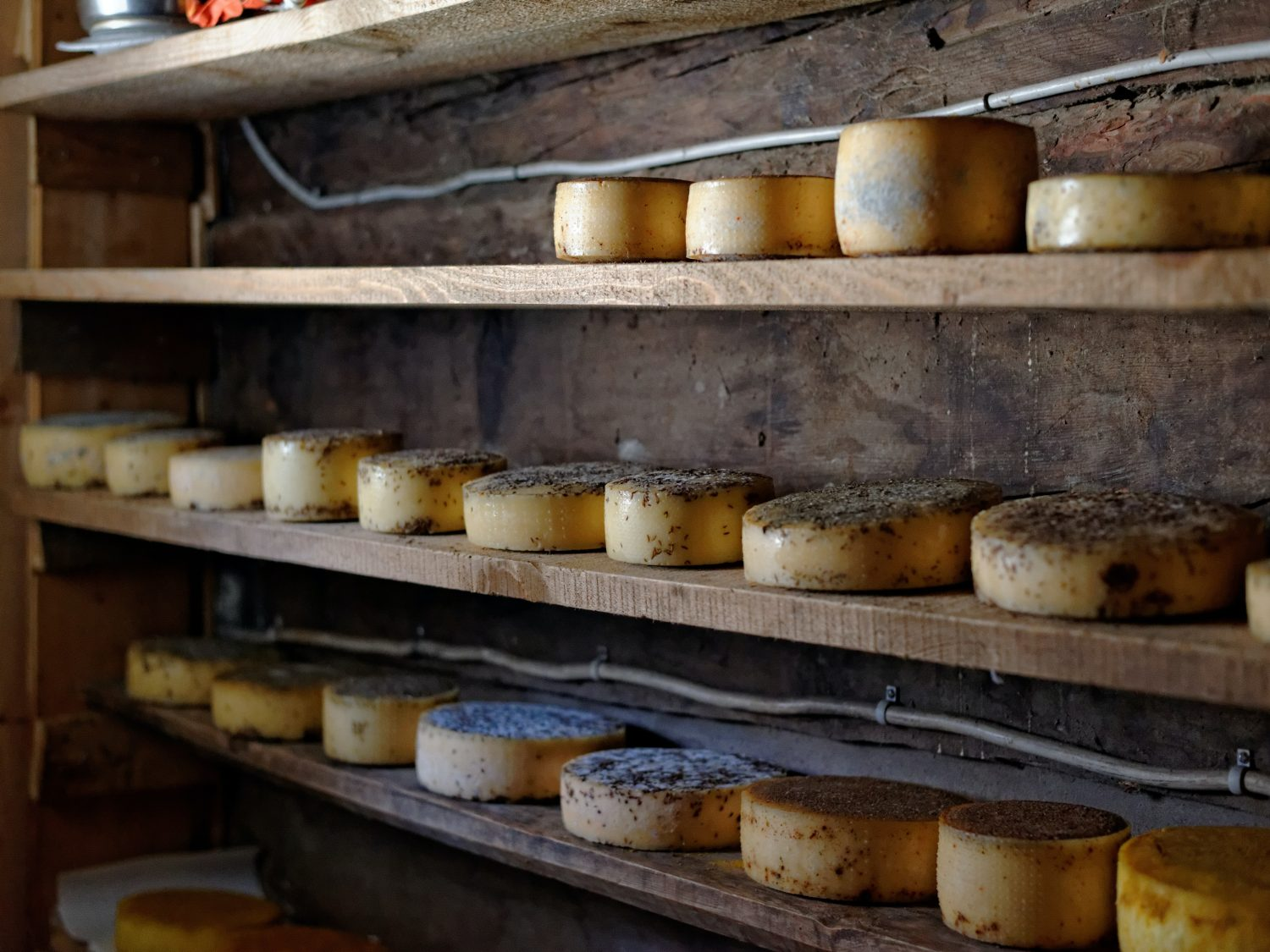 Hard cheeses using Rennet