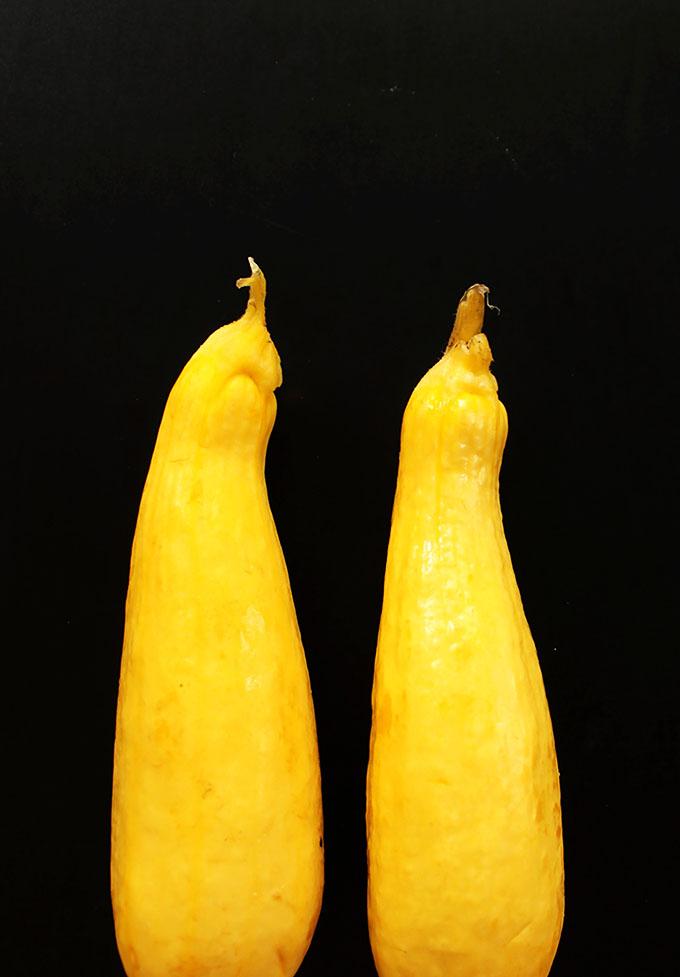 Beautiful yellow zucchini. AKA summer squash.    robustrecipes.com