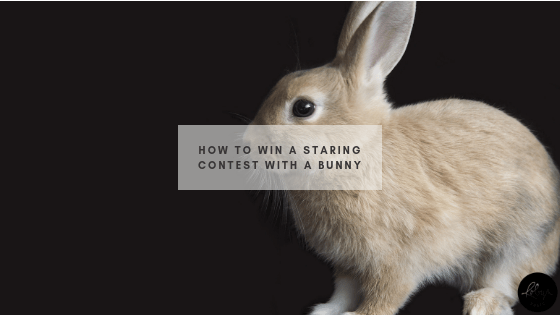 How to Win a Staring Contest with a Bunny Header