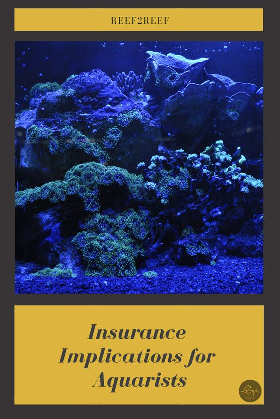 Insurance Implicatiosn for Aquarists
