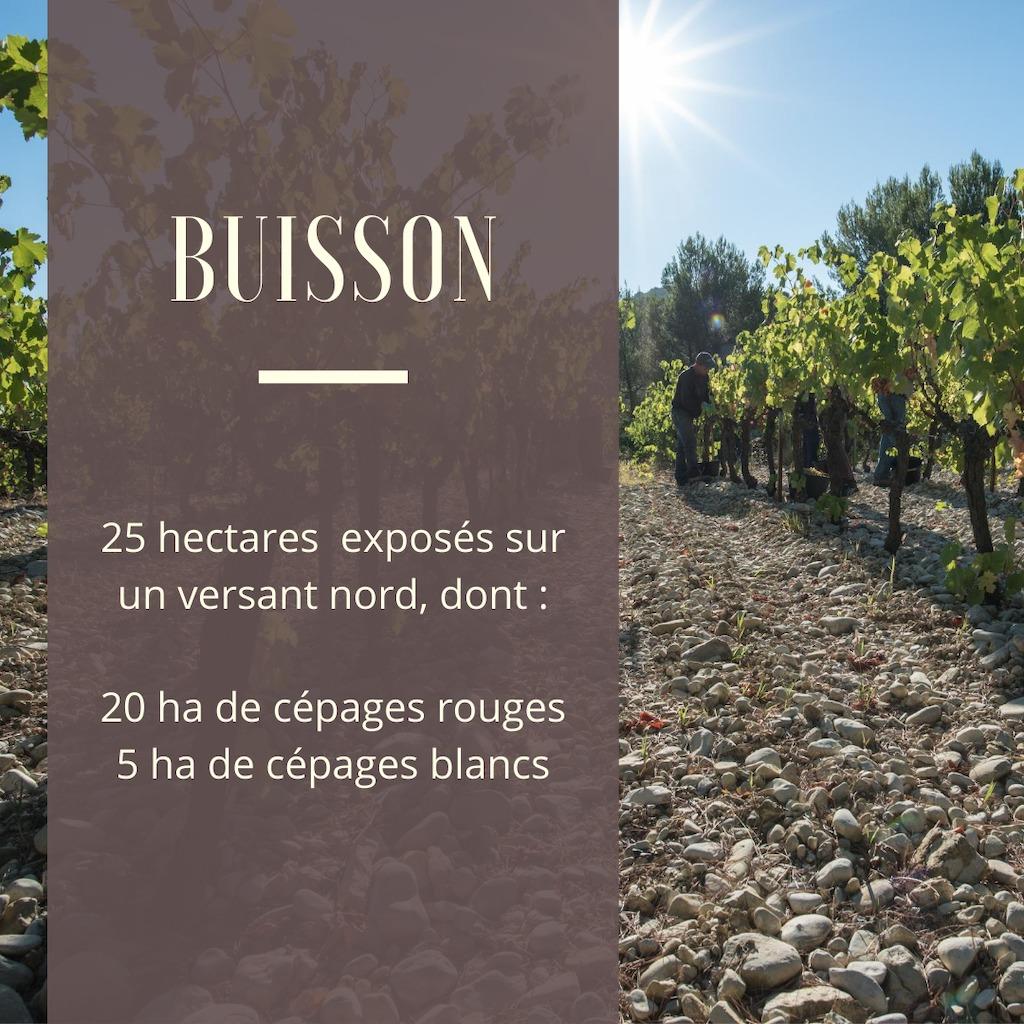 Terroir de Buisson - AOP Côtes du Rhône et Côtes du Rhône Vaison la Romaine
