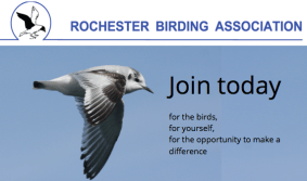 Join RBA for the birds