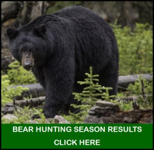 Bear Hunting Season Results