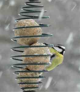 Bird feeder outside Granary at Roch Mill, Pembrokeshire Coast National Park
