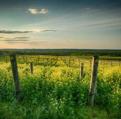 Blenheim Vineyards