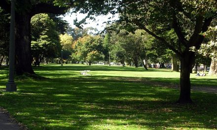 The Panhandle In Golden Gate Park