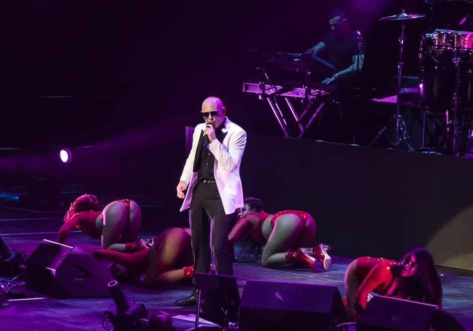 Pitbull13