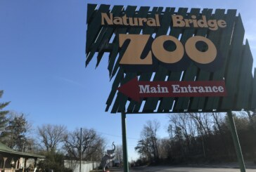 Natural Bridge Zoo elephant's living conditions called 'threat' to her health