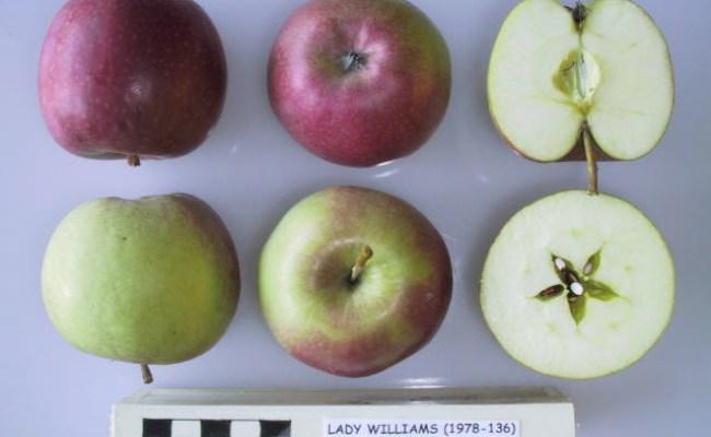 Lady Williams Apple Rock Bridges Trees