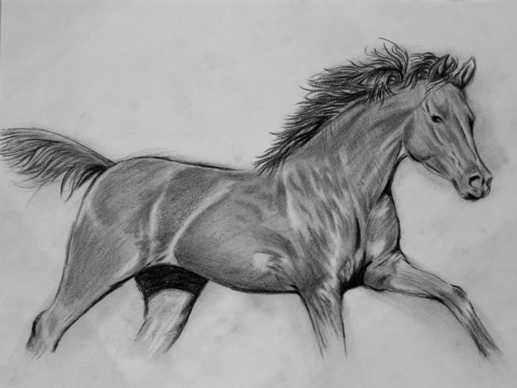 How to Draw a Realistic Horse Step by step Video for beginners and