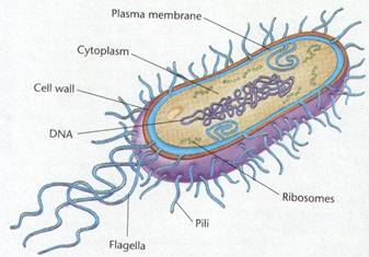 how to draw a cell diagram home inverter electrical wiring bacteria easy step by video tutorial labeled