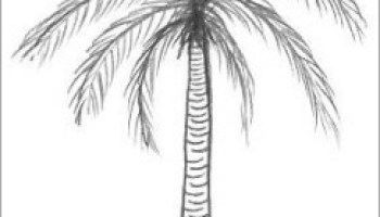 How To Draw Palm Tree Easy Step By For Beginner Or Kid Video Tutorial