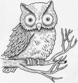 owl draw realistic cartoon step easy beginners drawing rock