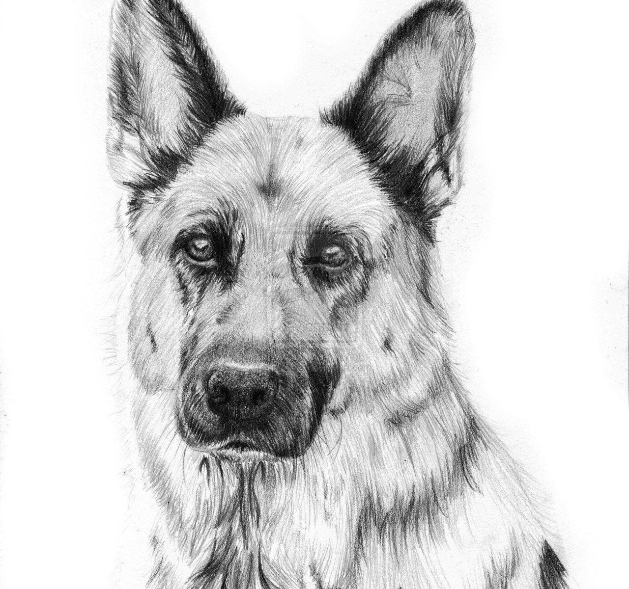 how to draw a German shepherd puppy
