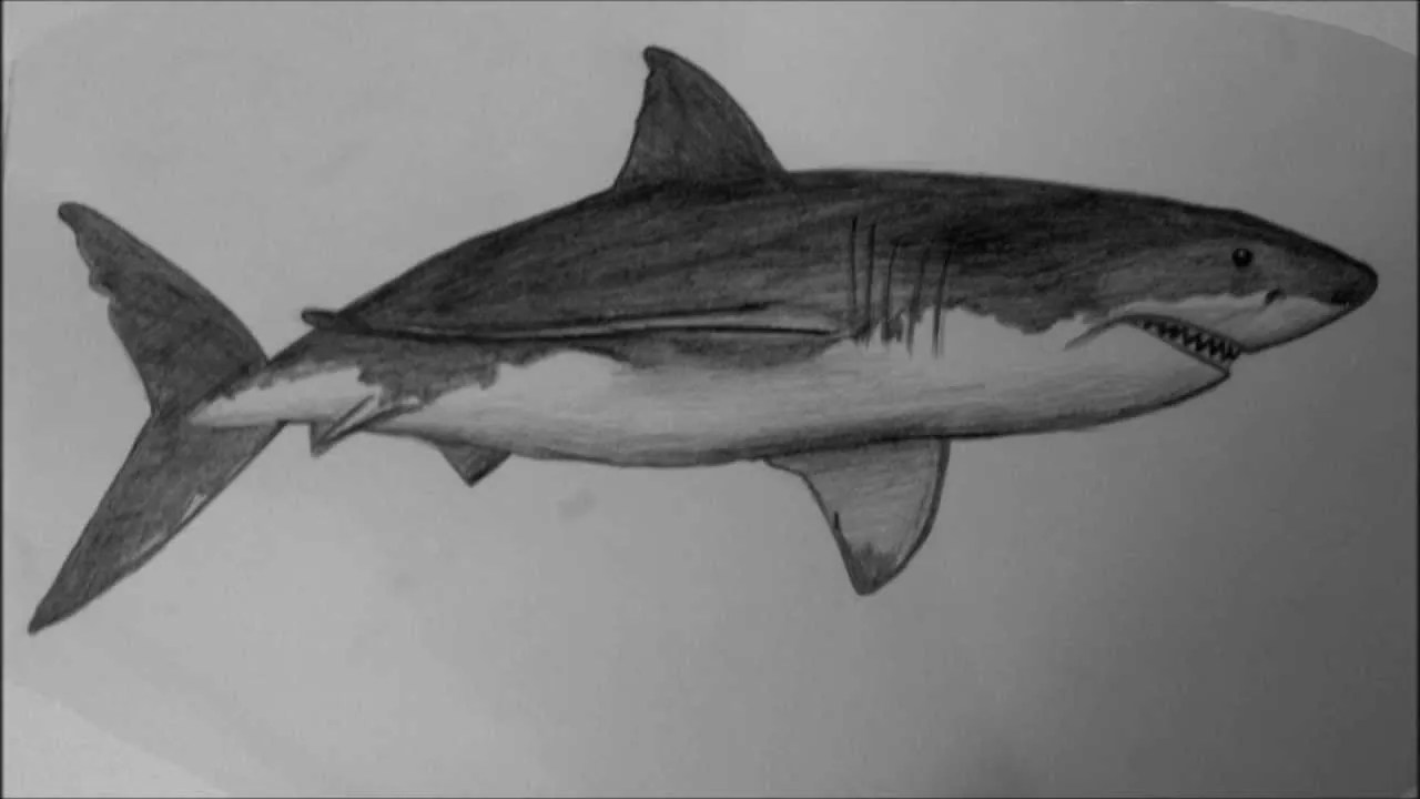 How To Draw A Shark Step By Step Easy Video For Beginners