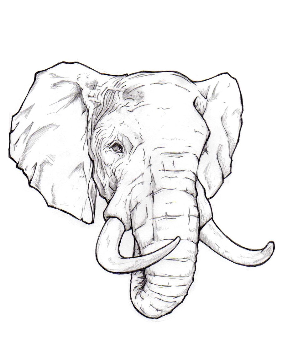 How To Draw An Elephant Head Step By Step Easy For Beginners