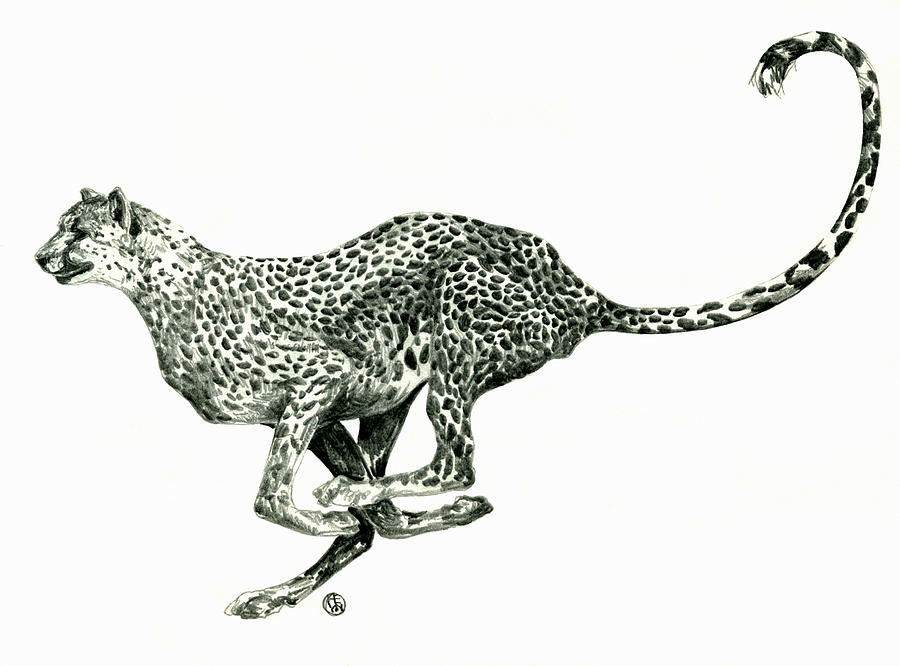 how to draw cheetah running
