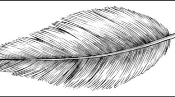 How to draw a feather easy step by step for beginners