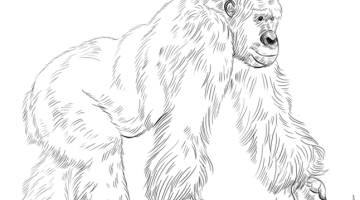 How to draw a gorilla standing up easy step by step for beginners