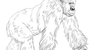 how to draw a gorilla standing up