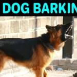 Loud Dog Barking MP3 Download