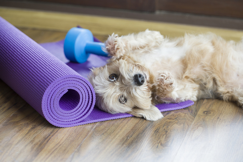 4 Steps To Help Your Pet Lose Weight