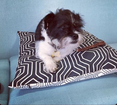 Bella on coordinating cushion