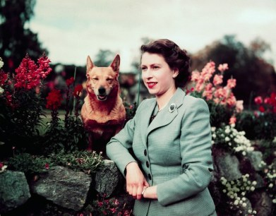 queens-corgis-history-dogs-ss01
