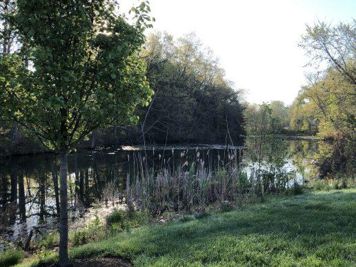 Tannery Pond