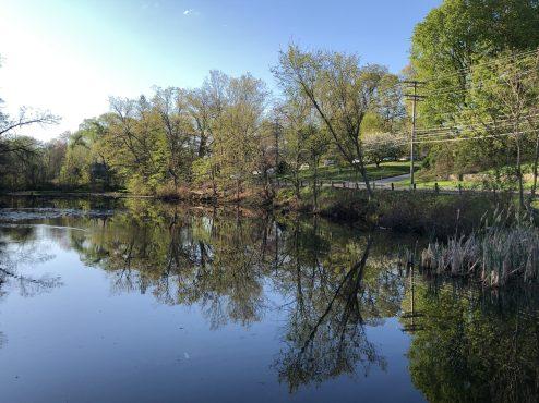 Pond Near By