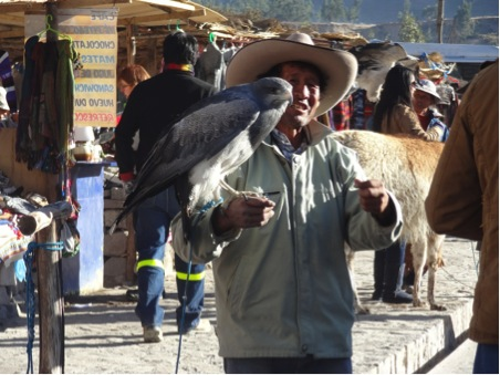Andean eagle
